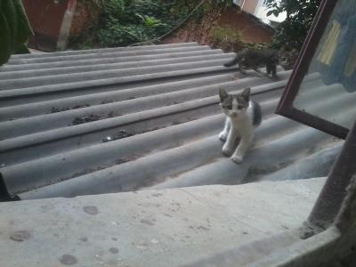 可爱的猫猫,这也算是我在城市中的见过的最…